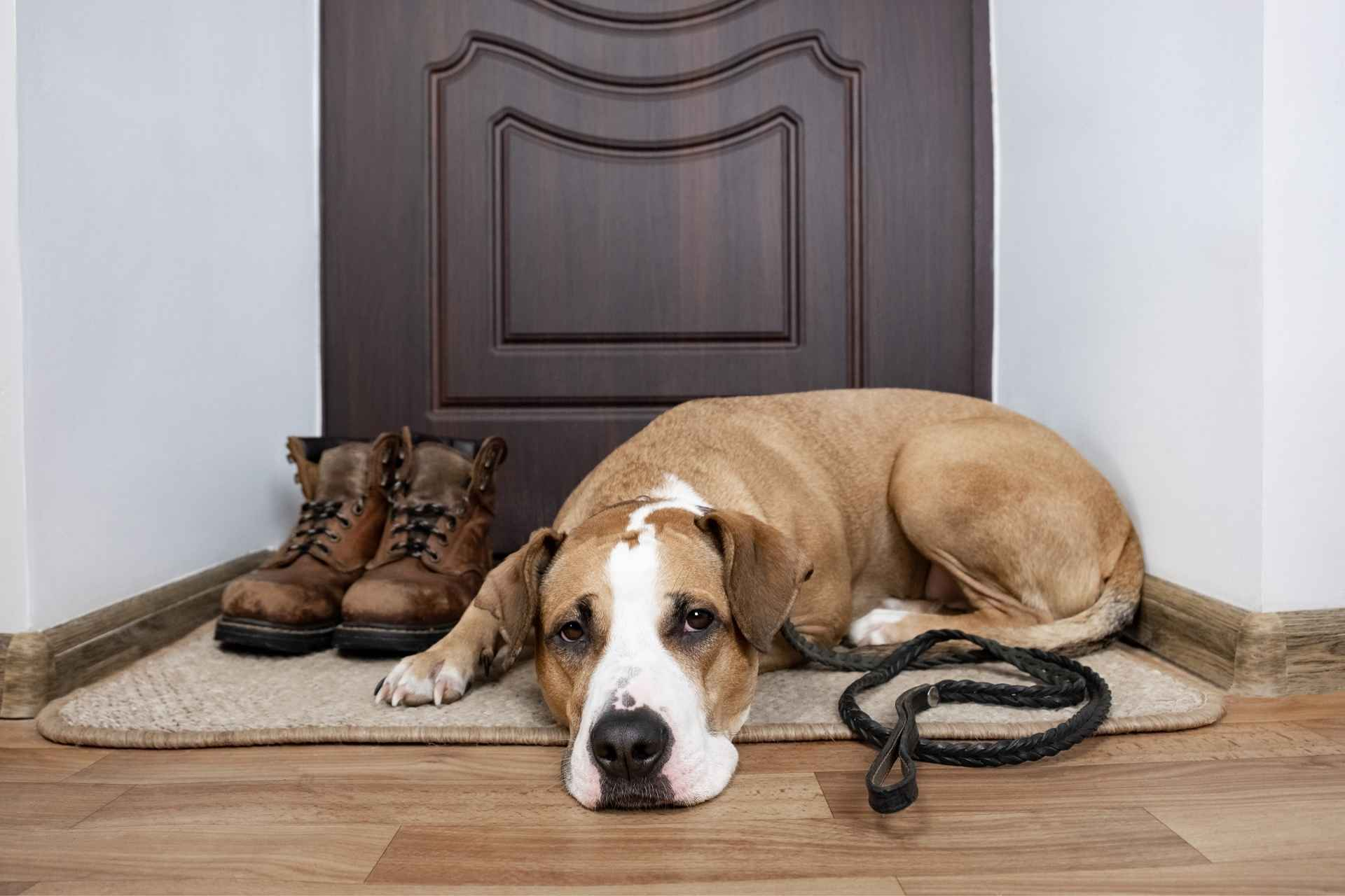 Home-Staging-Animales.jpg